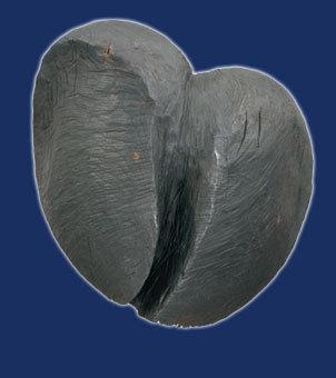 Galerie-Herzzeitlose-34